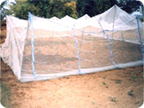 Chawki rearing in nylon nets. Tasar Cocoon pro- duction programme. Jharkhand