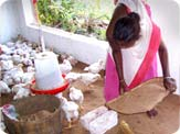 Broiler Poultry Rearing