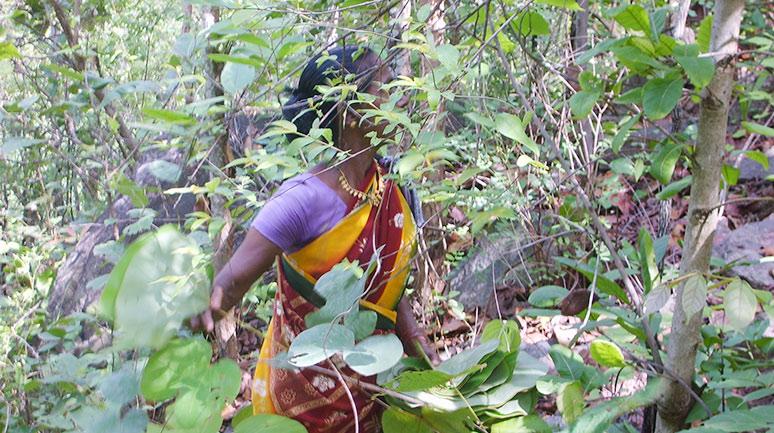 Pradan-Forest-Food-Diversity