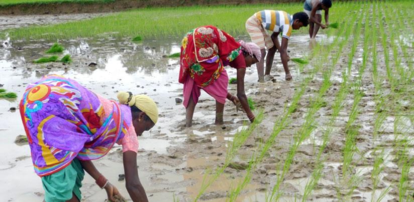 Agriculture-and-MGNREGA