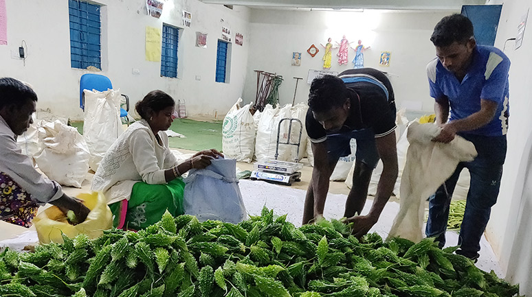 Packaging-of-vegetables-for-marketing-at-the-Alwa-Aggregation-Centre