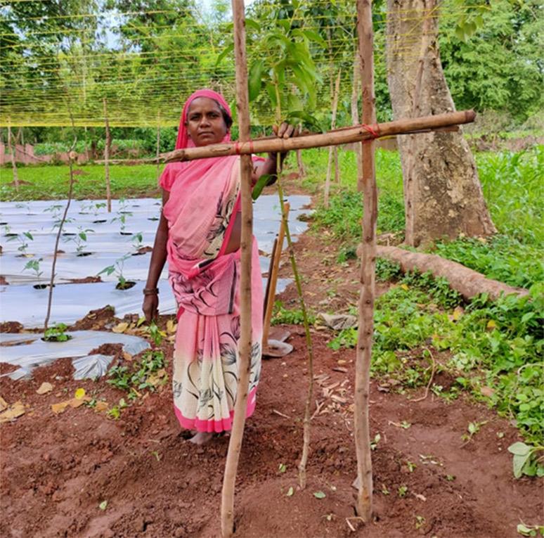 Purni-Manjhi,-Santoshi-Mata-SHG,-AlwaMango-orchard-layering-in-her-homestead