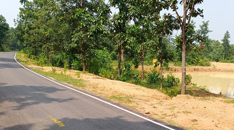 Kishanpuri-Road-and-Farm-pond
