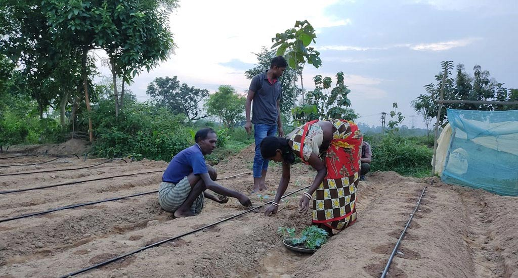 Collective-farming-main