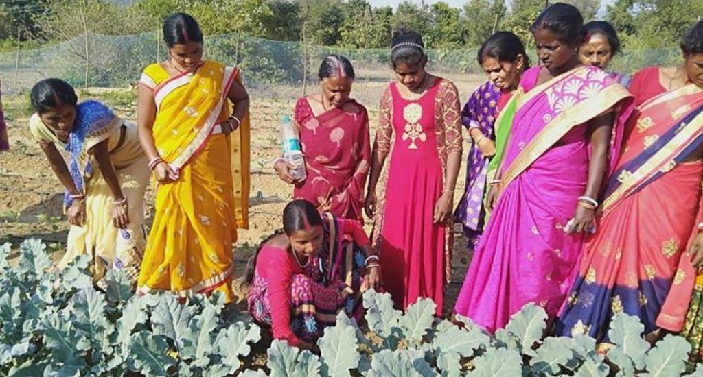 Collective-farming2